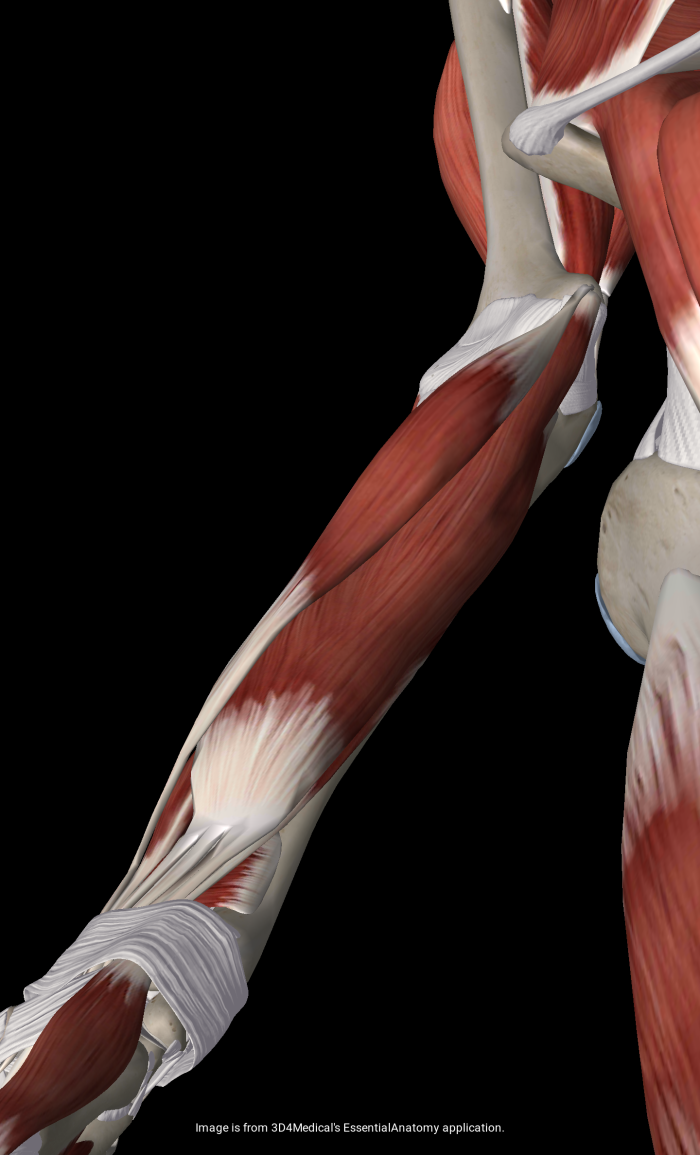 Elbow Pain: Not Necessarily Inflammation–And Why That Matters ...
